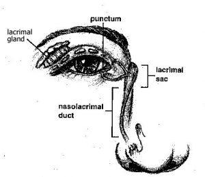 Nasal Diagram
